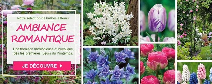 Cliquez ici pour les bulbes à fleurs Willemse