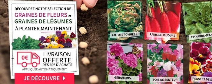 Cliquez ici pour voir les graines à semer Willemse