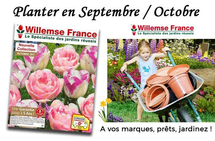 Willemse : tous les conseils pour planter en Septembre-Octobre