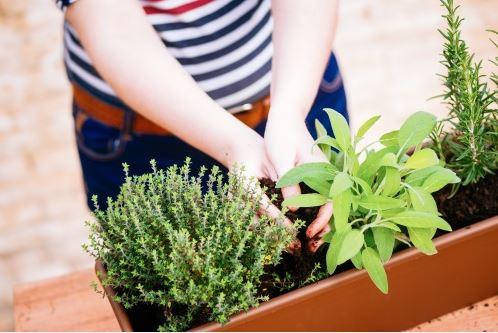 Willemse : que planter au jardin en Mars ?