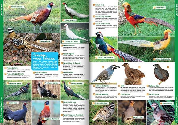 Catalogue la ferme de beaumont le catalogue en ligne pour les animaux de ferme - Ferme de beaumont poule ...