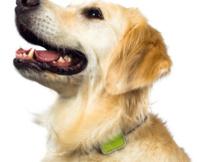 Notre suggestion de catalogues Animaux pour vos petites bêtes