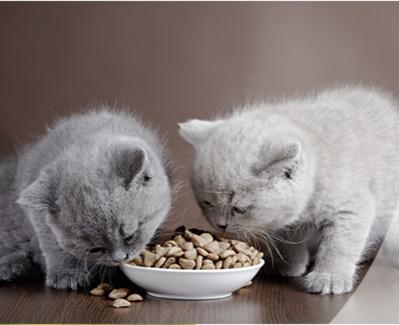 Offrez une alimentation adaptée à chacun de vos compagnons