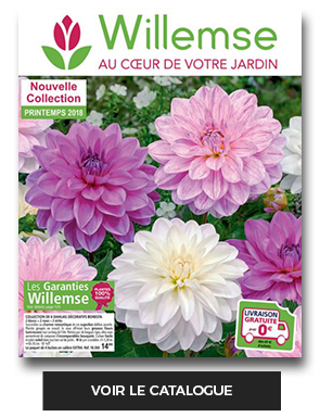 Catalogue Willemse