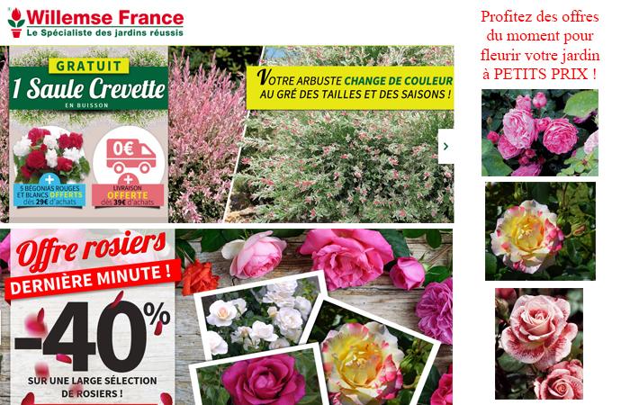 Profitez des offres du moment pour fleurir votre jardin à petit prix !