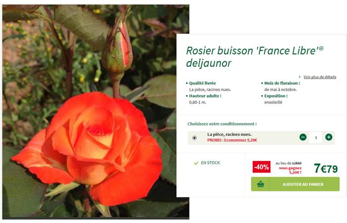 Je commande ce rosier buisson à - 40% de réduction.
