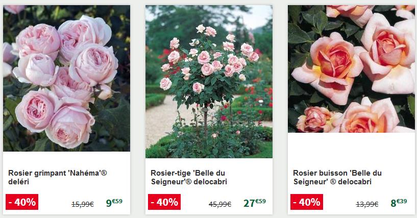 Toute une sélection de rosiers en promotion