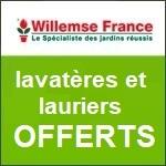 Willemse : lavatères et lauriers offerts !