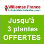 Willemse : jusqu'à 3 plantes fleuries offertes !